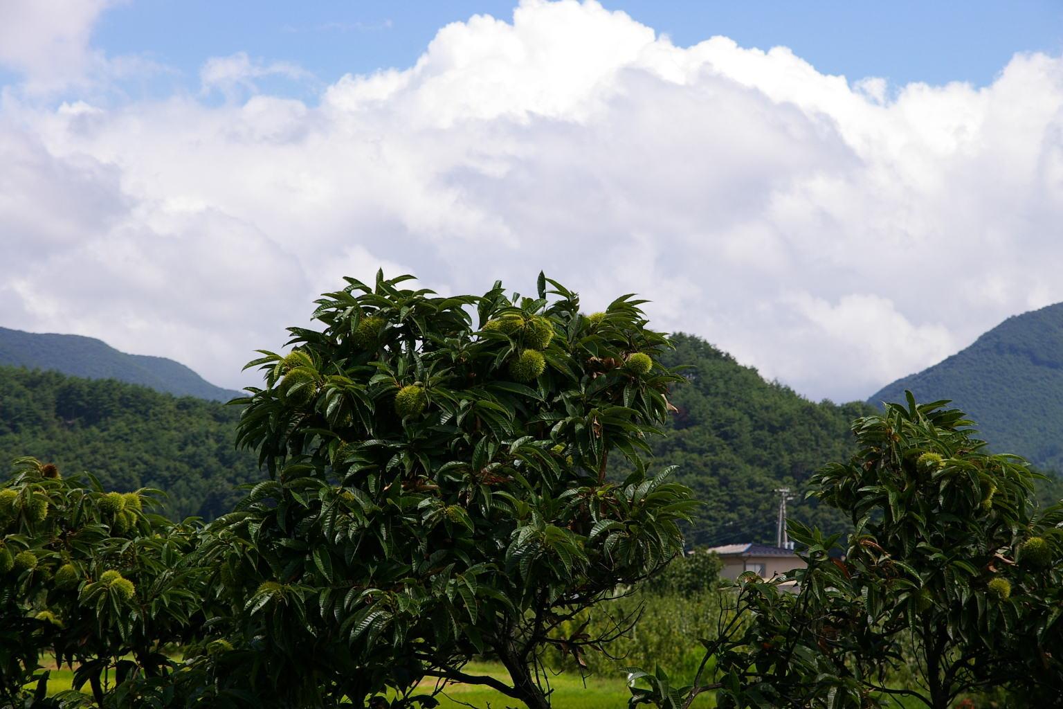 栗の木の上に、雲沸き立つ