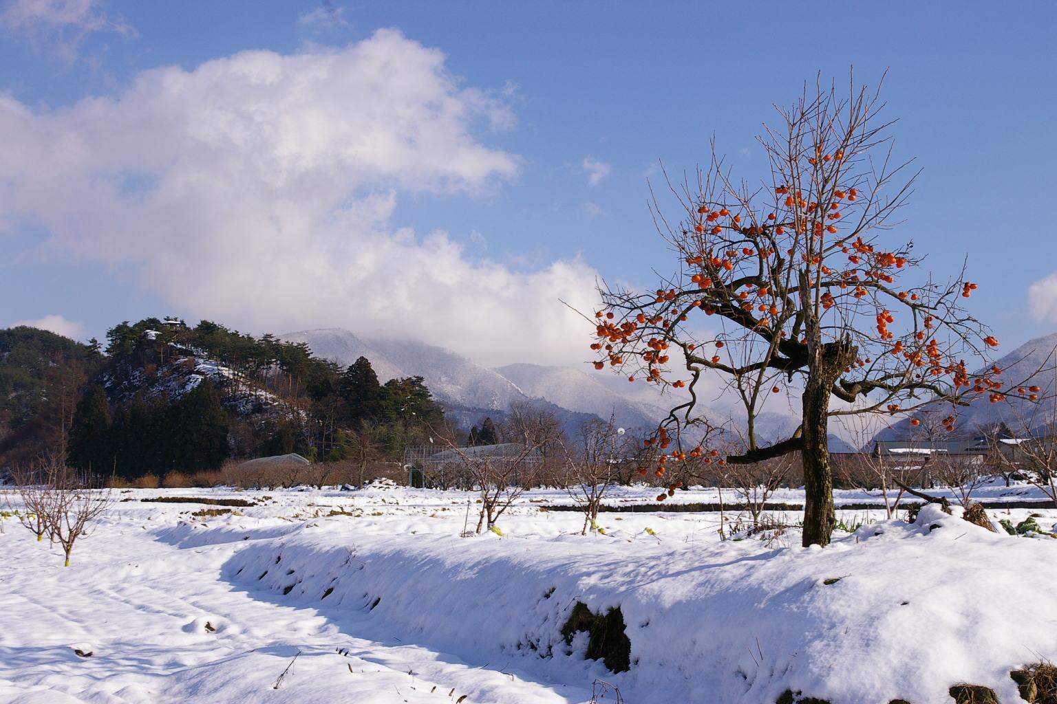 「雪原に1本の柿木」 東根市観音寺 石崎山付近
