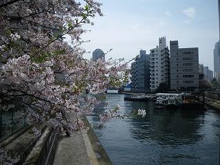 東京は桜の季節