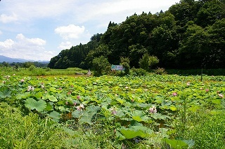 戸沢村 蓮畑
