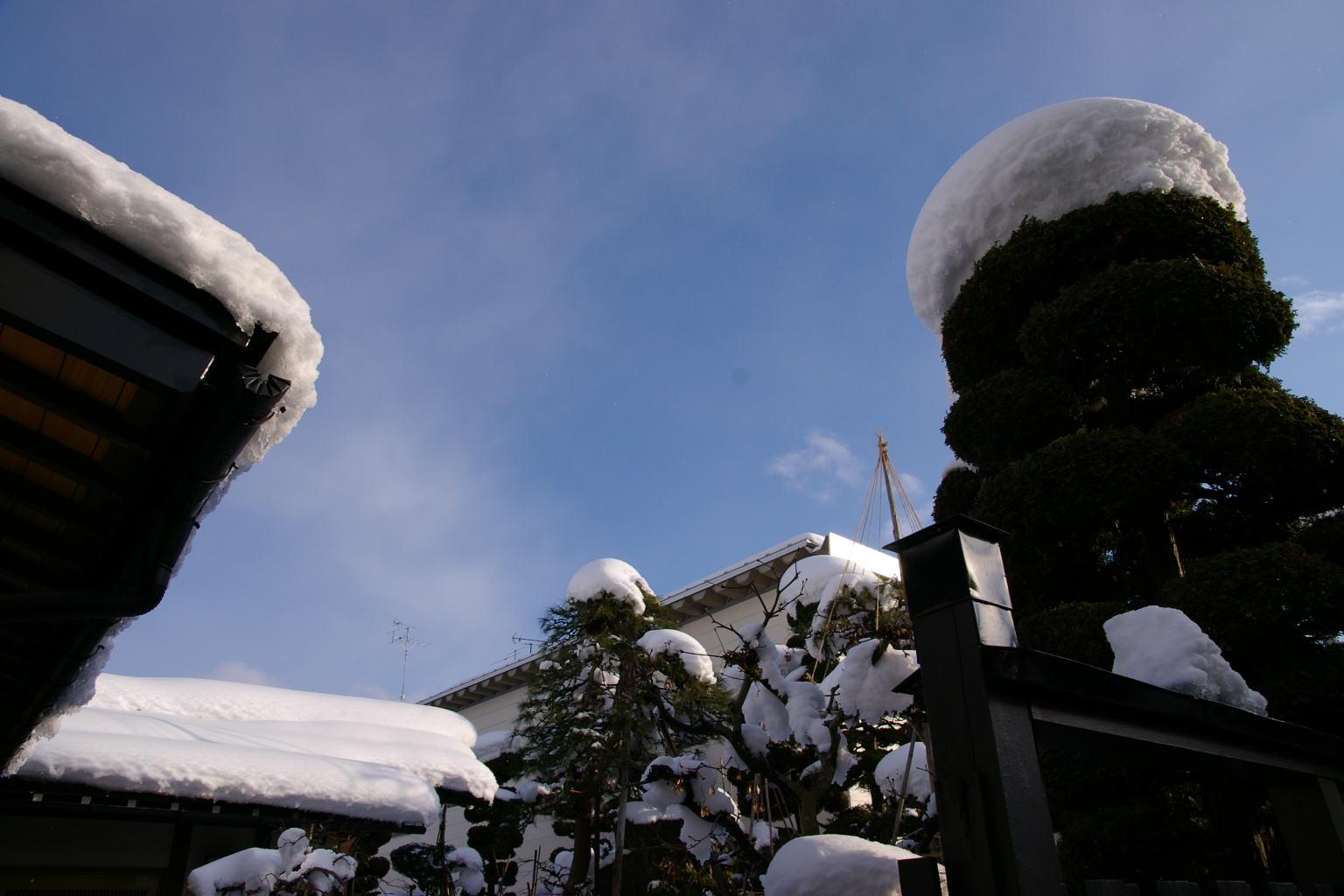 青空 我が家の庭です