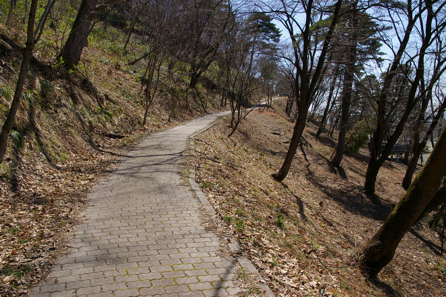 早春の若木山