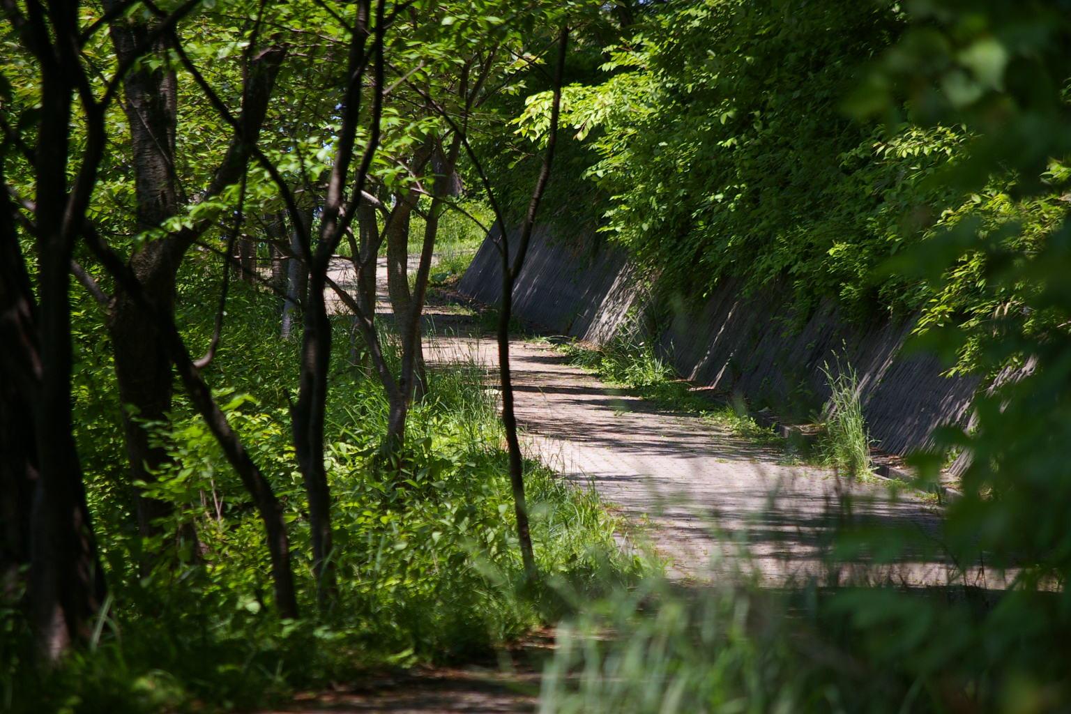 若木山を昇る道