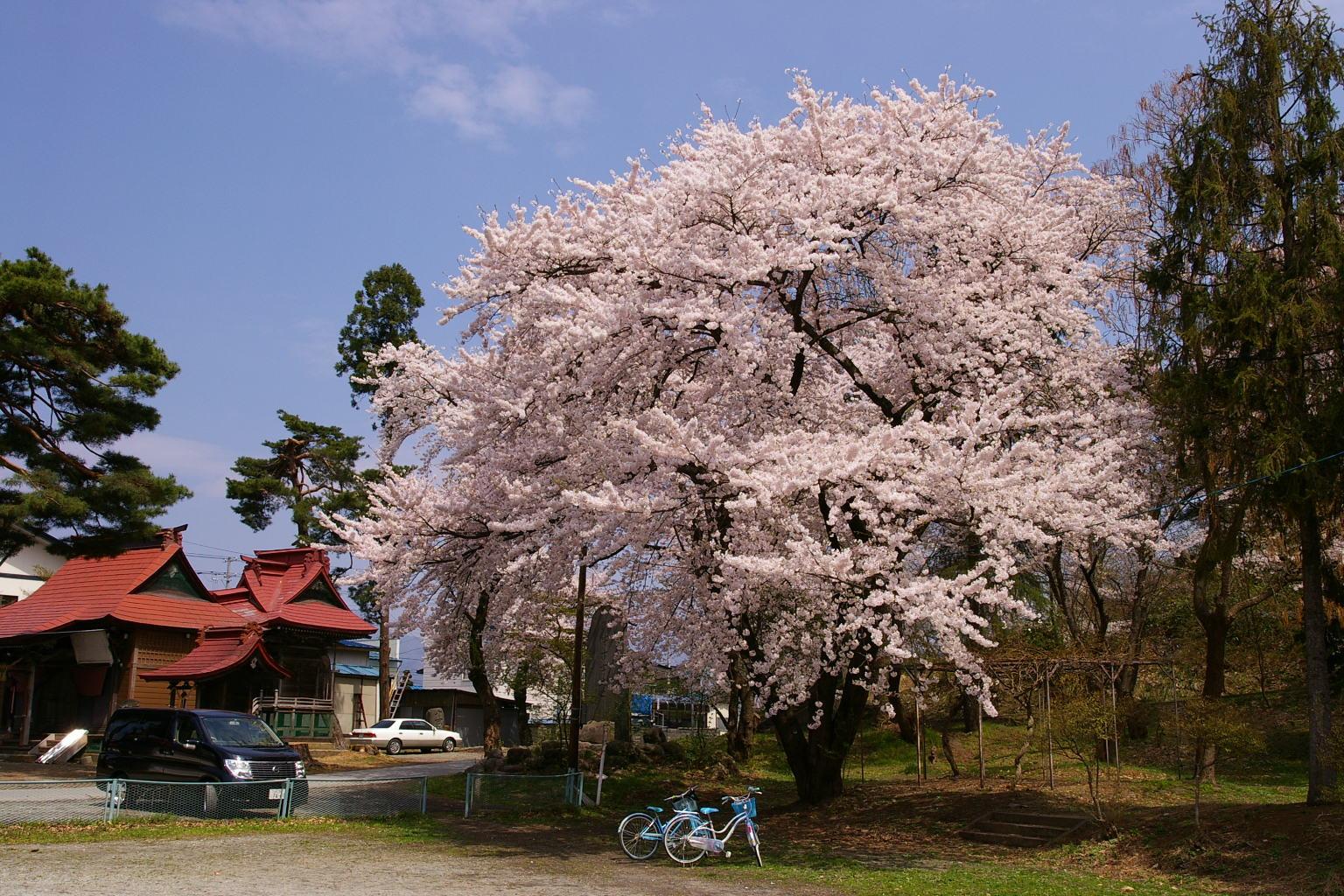 花咲く若木山公園