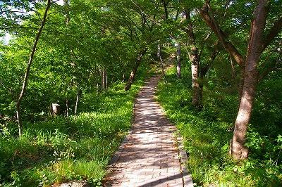 若木山山頂へ登る道