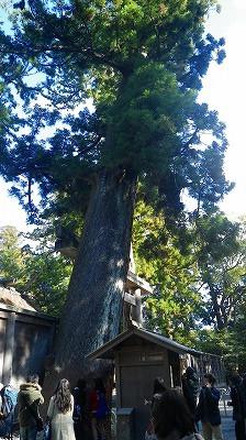 伊勢神宮の参道にある木々