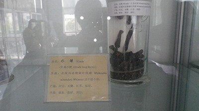 ここは「虫薬」の展示室です。