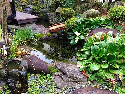 我が家の庭 しっとりと雨降り