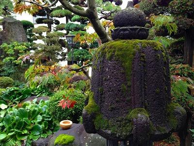 石燈籠の苔は雨に濡れて生き生きとしています。