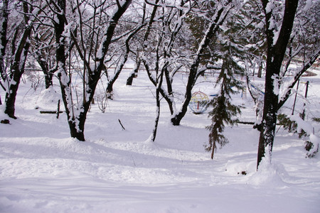 冬の若木山