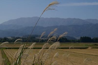 葉山連邦をすすきに眺める