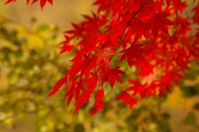 奥入瀬の紅葉