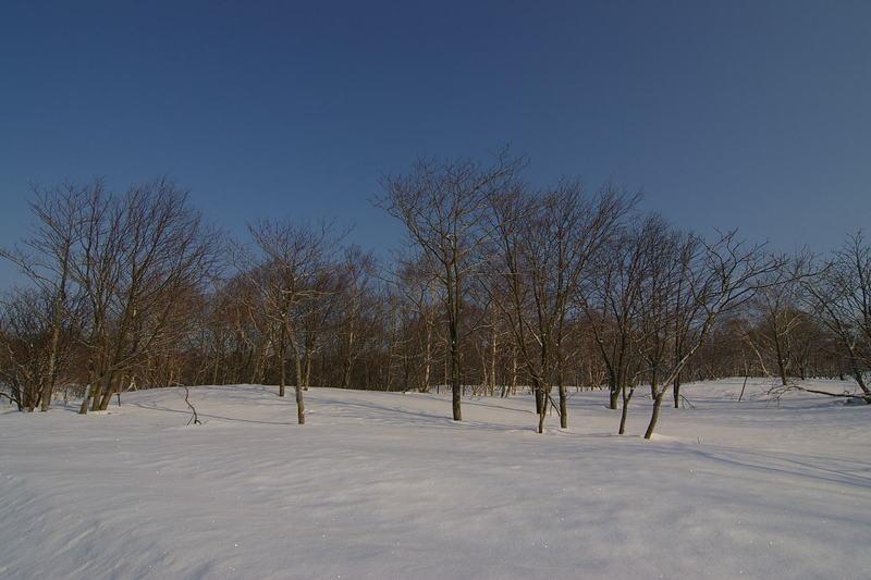 雪原に樹木が広がる 「樹海ライン」