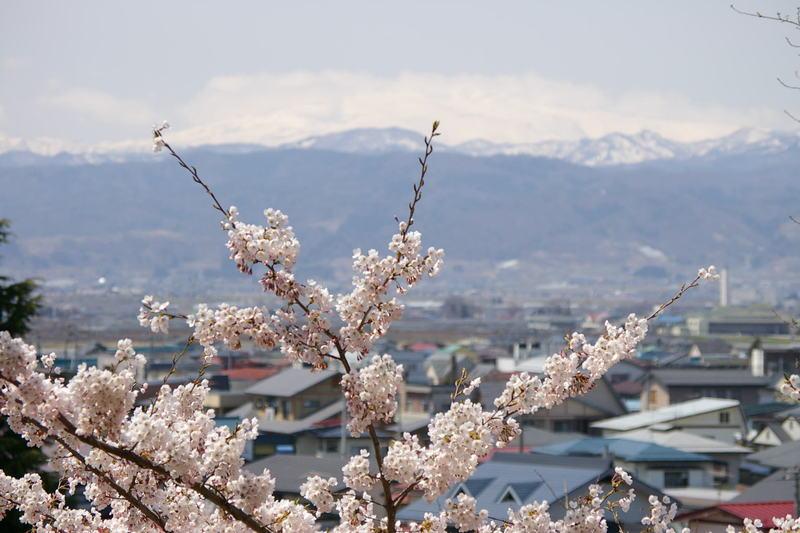 「月山と桜」 若木山に登って撮影しました