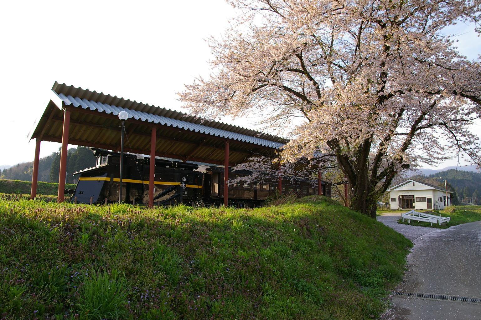 日中線記念館の満開の桜