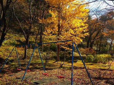 若木山公園もすっかり秋。ブランコと銀杏の風景
