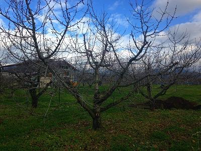 東根市の果樹園
