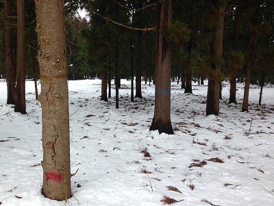 東根市の営林署