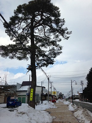 羽州街道(旧国道13号線)の松
