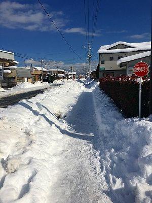 冬の散歩道です
