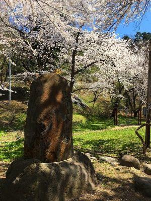草木塔と桜