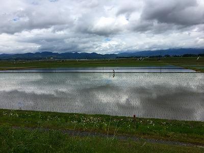 大石田の田んぼ