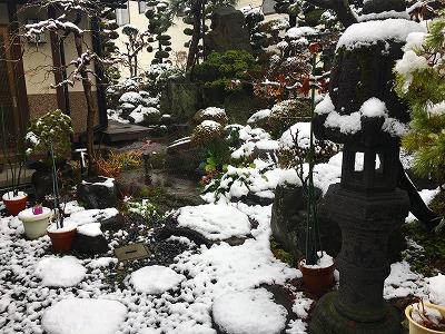 雪が降った様子