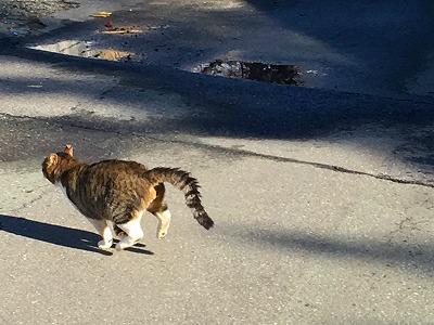 昼休みの散歩をしていると猫が歩いてきました!