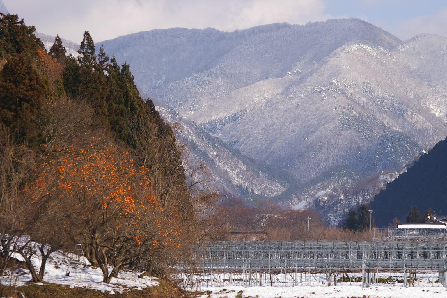 柿の木と奥羽山脈の雪景色