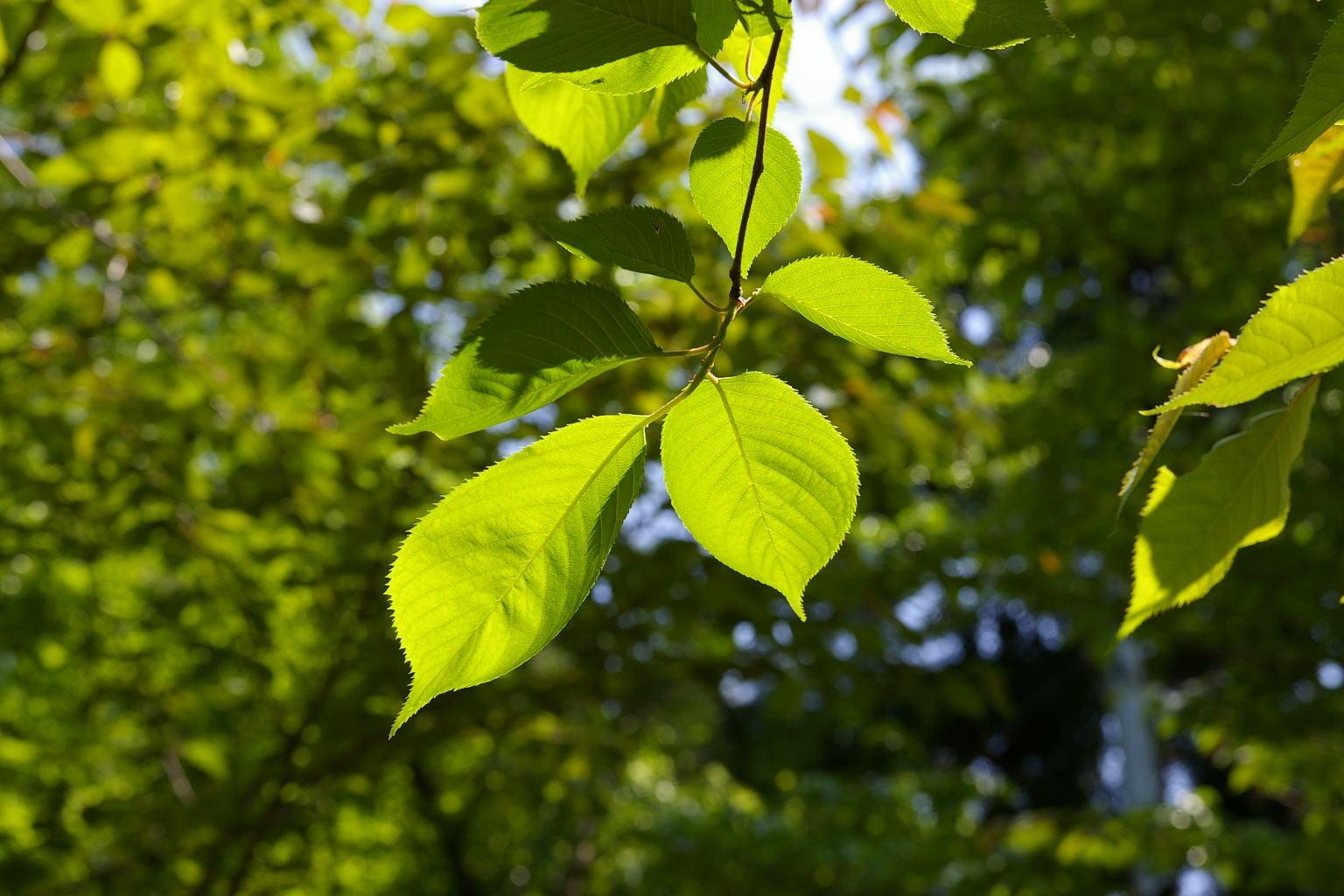 若木山にて 「緑」