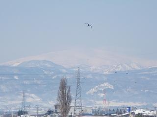 野川橋より 冠雪の月山と鳥