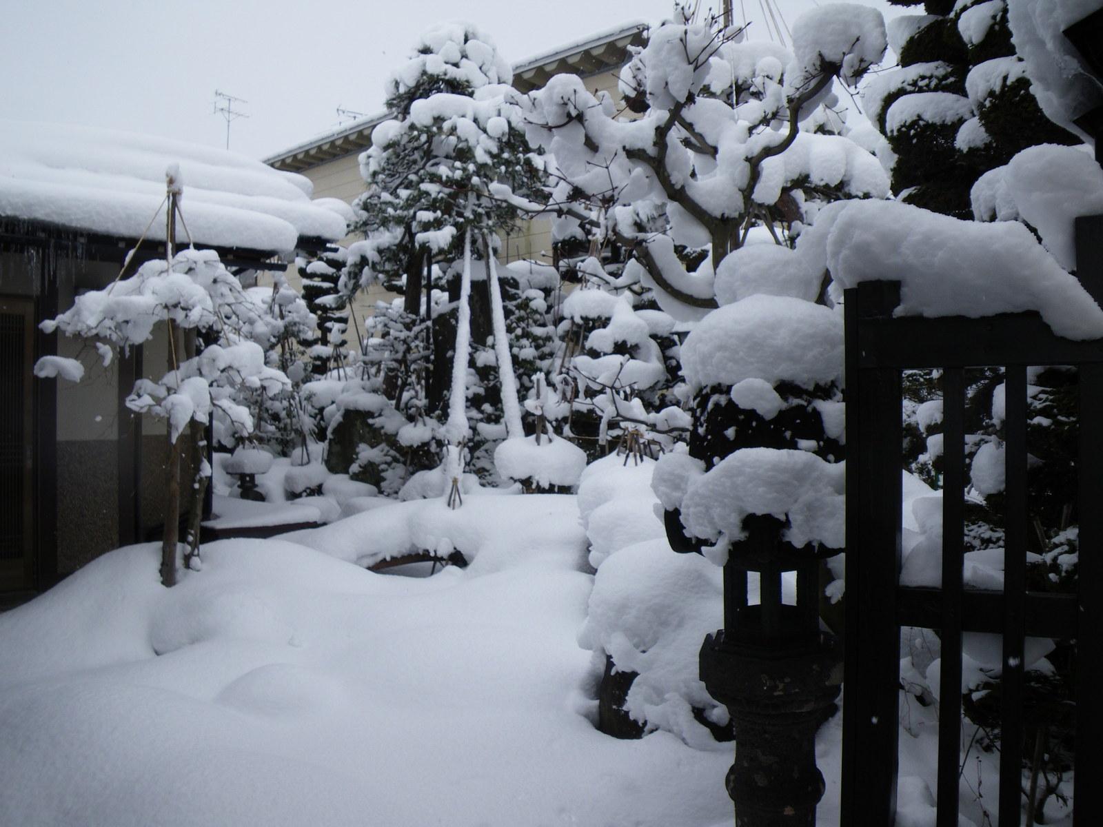 我が家の庭、真冬の雪景色