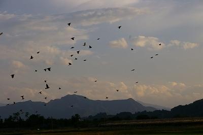 そこに鳥たちが空へパッと飛び出します。