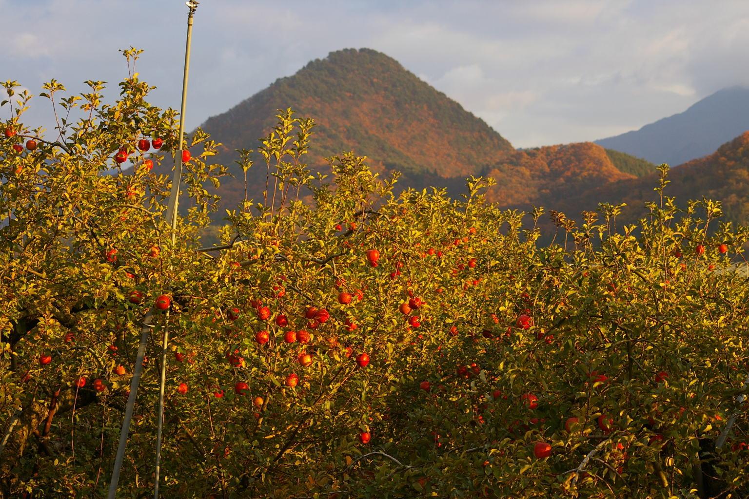 天童川原子の水晶山の紅葉