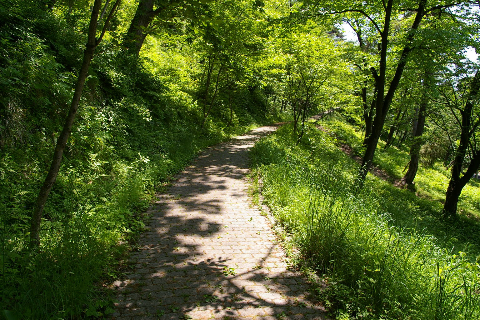 若木山に登る道