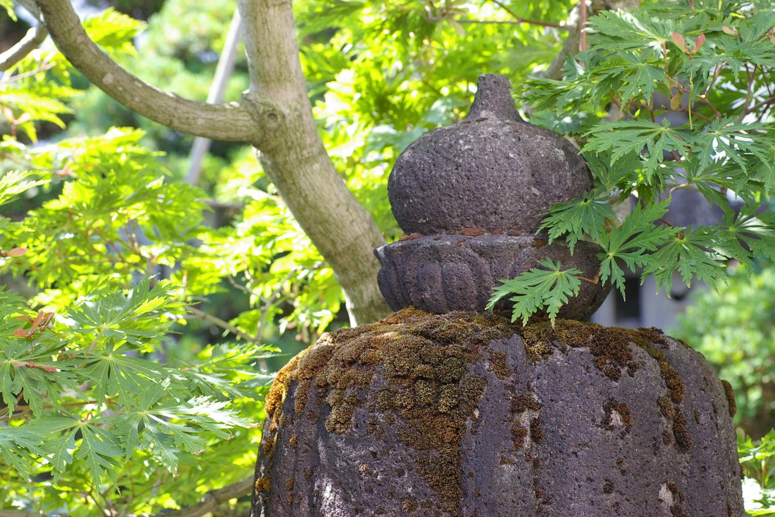我が家の庭、ハウチワカエデと石灯籠
