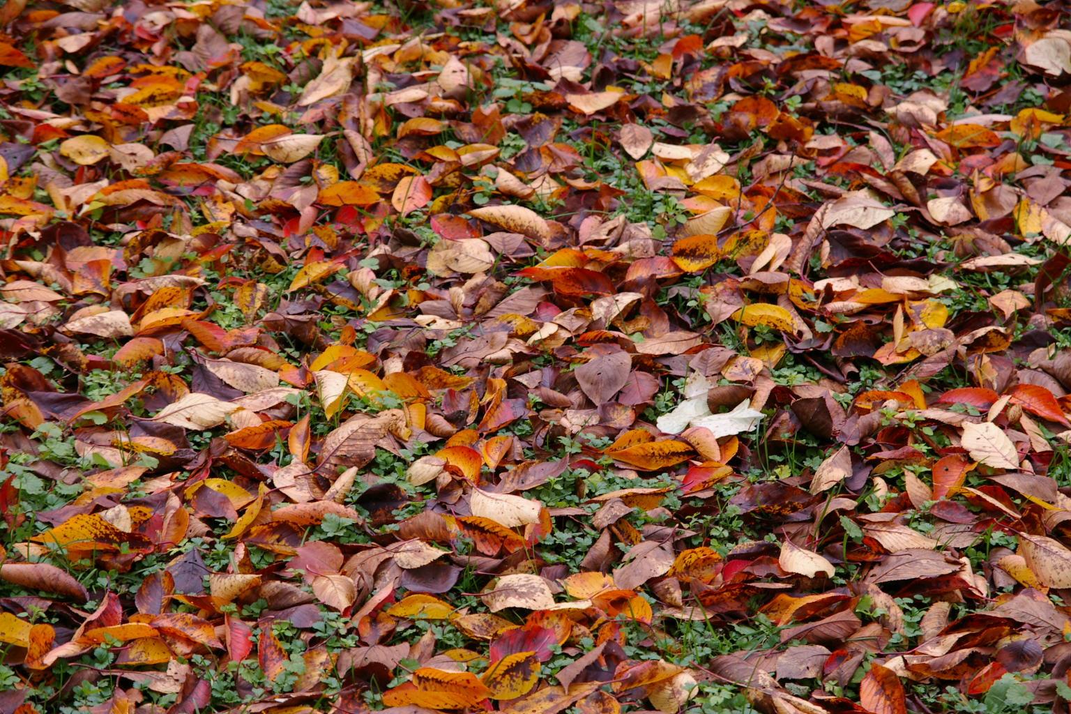 若木山 すっかり落葉になり冬支度といったところ
