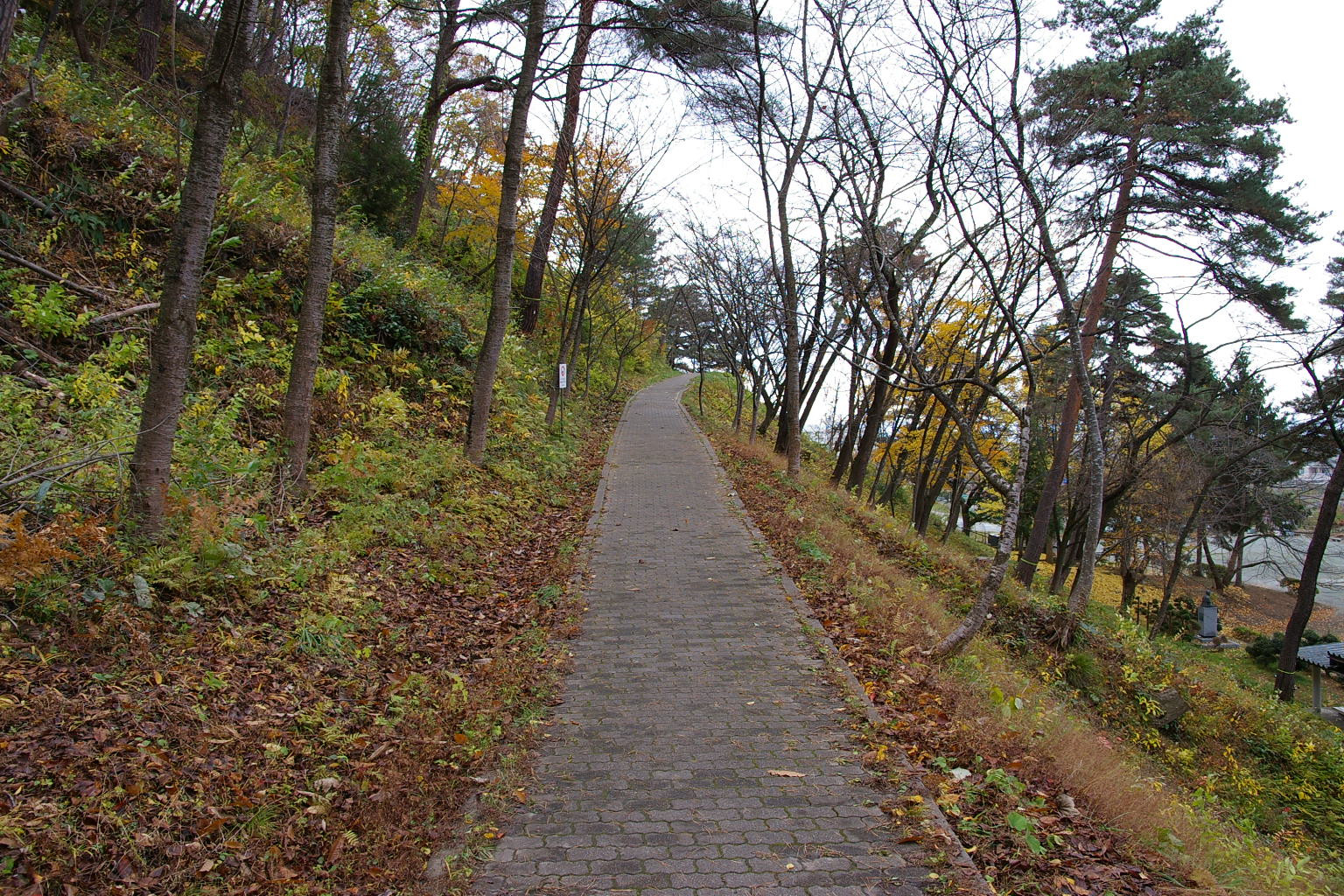 11月の秋深まる若木山を登りました