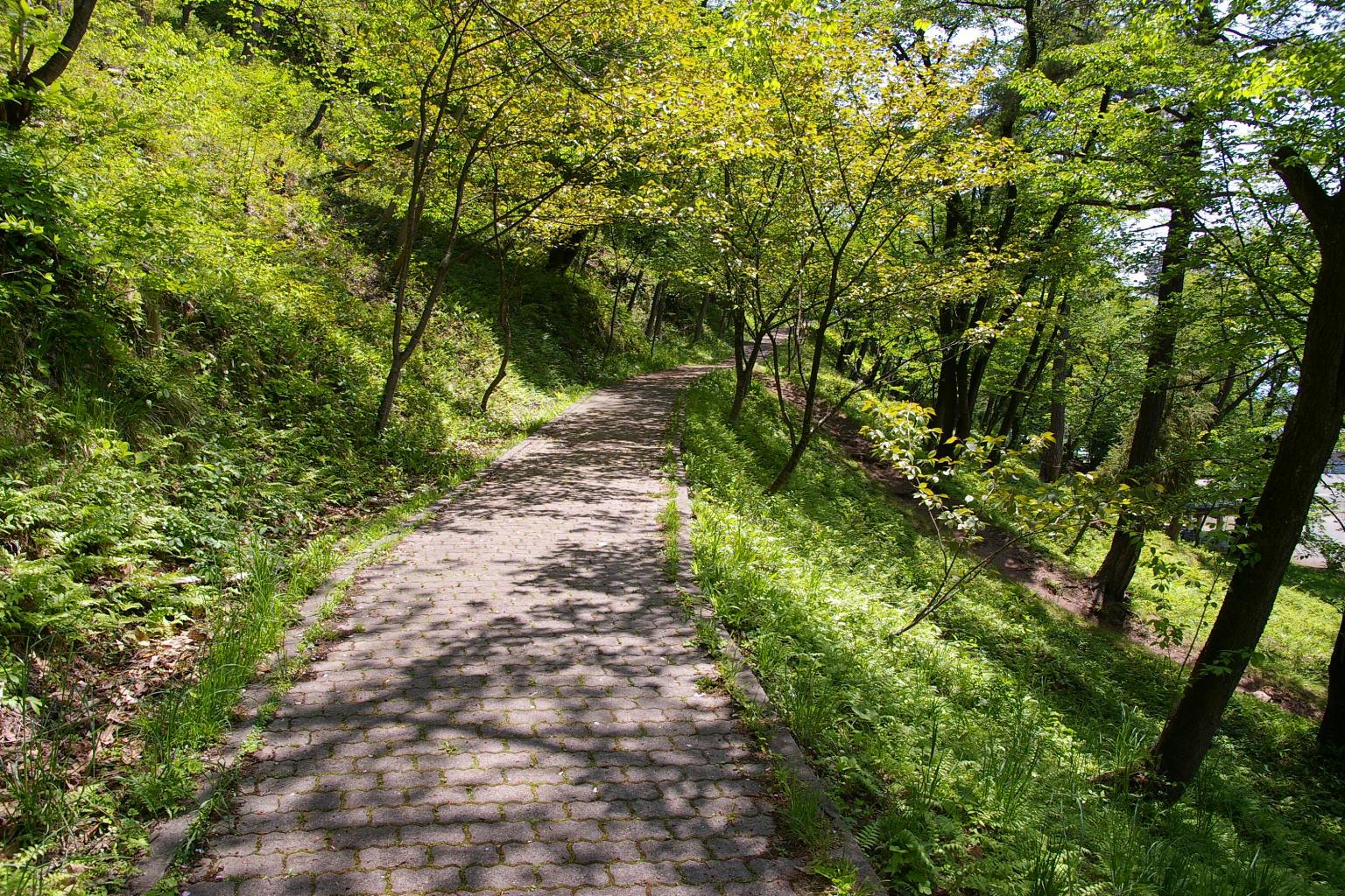 風薫る五月は若木山の季節。
