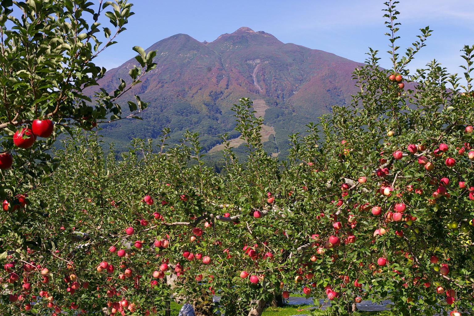岩木山とりんご