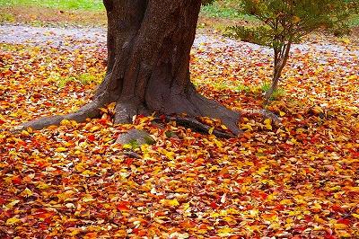 落ち葉の若木山