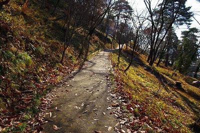 若木山はすっかり枯葉散る秋の季節