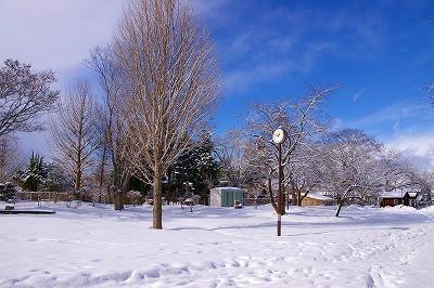 雪原が実に美しい若木公園です