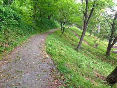 夏の若木山の緑