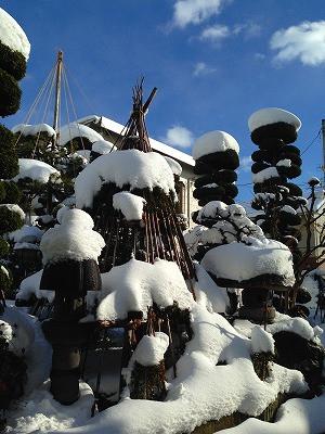 我が家の庭、冬に晴れました