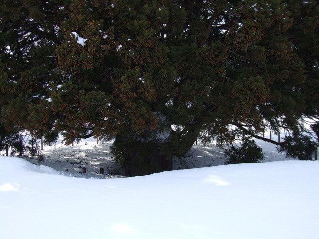 「トトロの木」の根本はこうなっていた