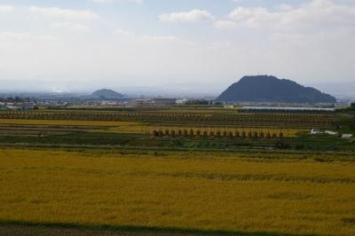 稲穂の風景、大森山と若木山
