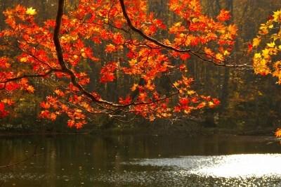 月沼の紅葉