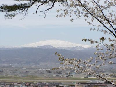 若木山の桜の季節