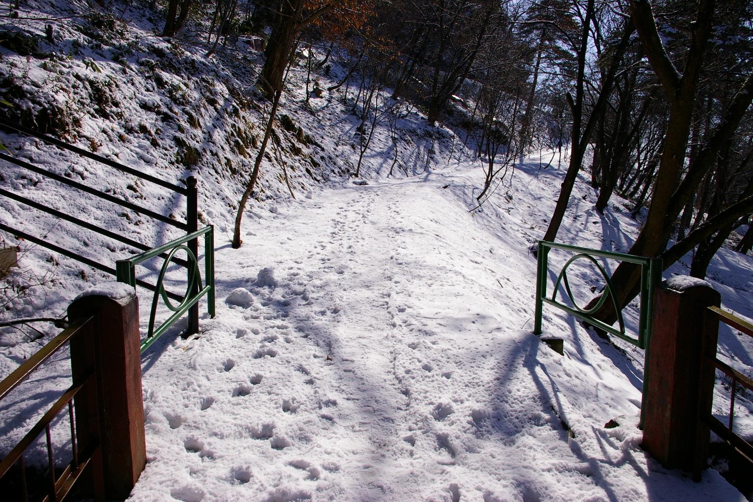 「若木山を昇る道」